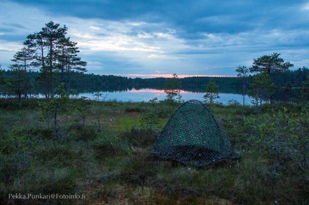 Maastoverkolla piiloutuva telttani Tartlammen rannalla.